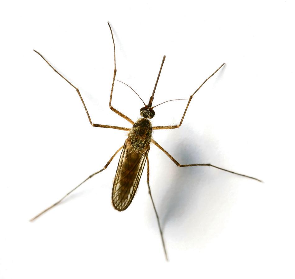 Het muggenseizoen is begonnen