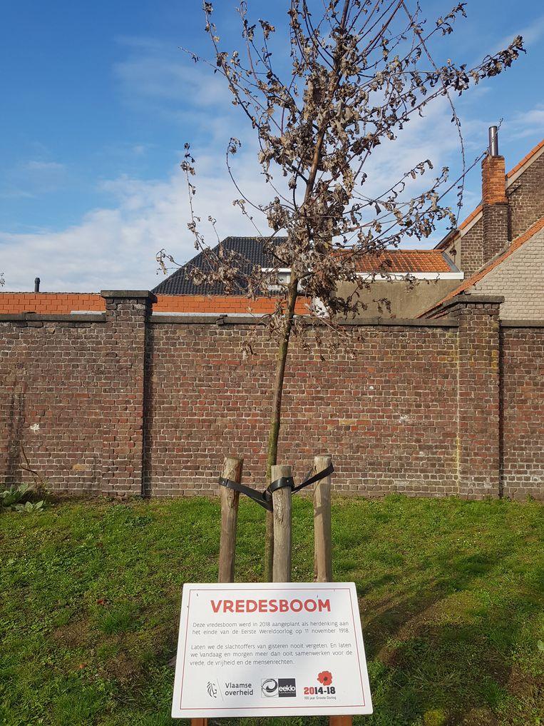 De vredesboom is afgestorven.
