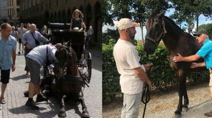 """Brugse koetsiers op achterste poten na commotie ingezakt paard: """"Nogmaals, wij hebben het beste met onze dieren voor"""""""