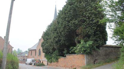 Bomen dreigen kerkhofmuur te slopen