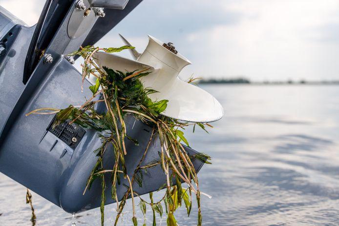Waterplanten zorgen voor overlast voor watertoeristen