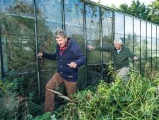 Overwoekerende tuin in Elburg houdt naast de gemoederen nu ook - eindelijk - de politiek bezig