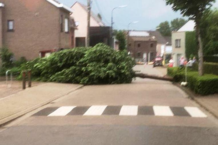 In de Watermolenstraat in Wanzele belandde een boom dwars op de straat.