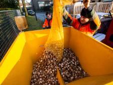Apeldoorn zet bloembollen in tegen de eikenprocessierups