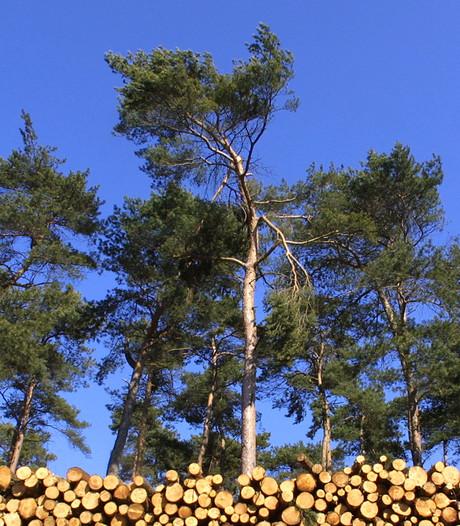 Boswachter Natuurmonumenten: Naaldbomen