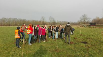 Vijftig vrijwilligers helpen Natuurpunt bij planten Pluysegembos
