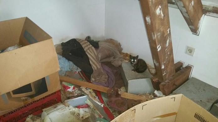 In totaal zijn 16 katten aangetroffen in de woning.