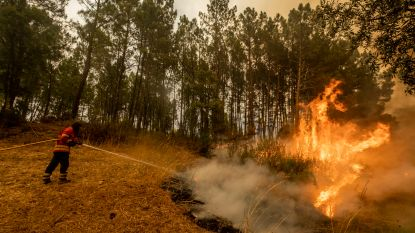 "Felle bosbranden in Portugal zijn ""onder controle"""