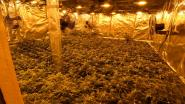 Cannabisplantage in Portugesestraat ontmanteld