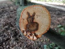 Opmerkelijke creatie: Een konijn in een afgezaagde beukentak