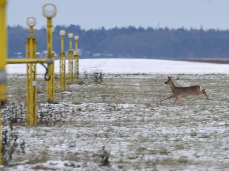 Faunabeschermers schrikken van ontheffing voor doden dieren bij vliegveld Twente