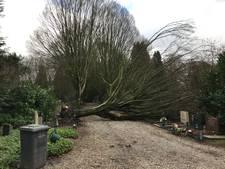 Storm raast over Deventer begraafplaats: bomen vallen op graven
