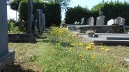 Slordig en onkruid? Begraafplaats Oosteeklo is gewoon 'bij-vriendelijk'
