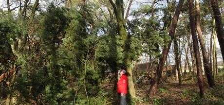 Ook bomen rondom De Noenes in Haaren getroffen door storm
