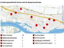 Gemeente Sliedrecht brengt bomen met eikenprocessierups in kaart