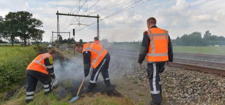 Gelderland haalt alle naaldbomen langs wegen en sporen weg in strijd tegen bosbranden