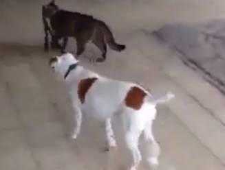 Wie laat de hond uit? Dat zal de kat wel doen