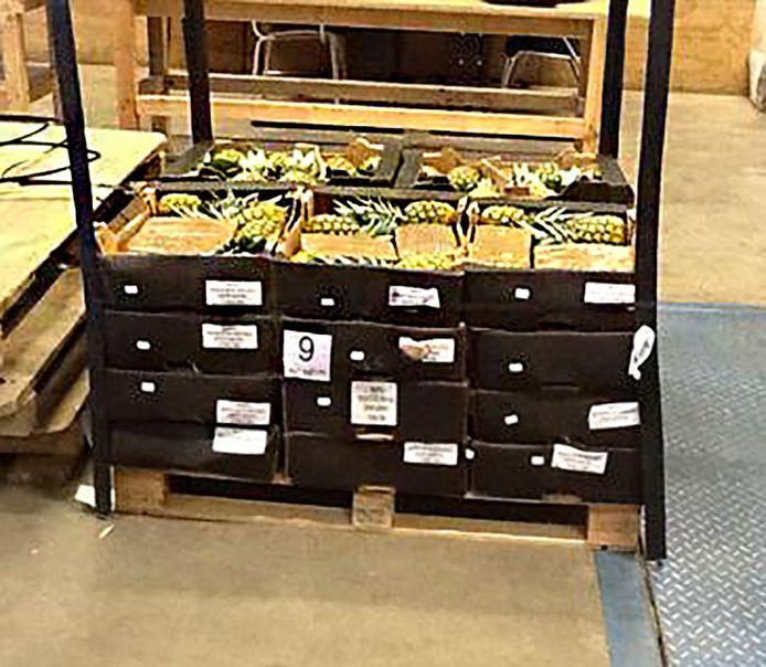 Archieffoto: De Douane vond onlangs 300 kilo cocaïne in een container met verse ananas. De drugs, met een waarde van ongeveer 10 miljoen euro, zijn inmiddels vernietigd.