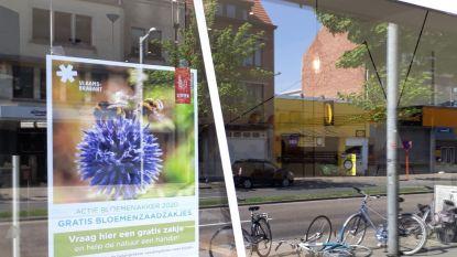 """Leuvenaars krijgen gratis bloemenzaadjes bij de bakker: """"Om onnodige verplaatsingen te vermijden"""""""