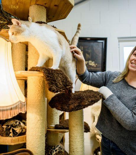 Ook dieren in het asiel krijgen een kerstpakket: 'Mensen leggen spontaan pakketten bij de deur'