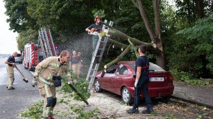 Boom valt op auto na windstoot