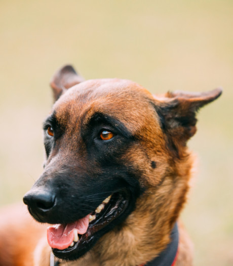Politie schiet weggelopen puppy dood, baasje is woedend