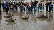 Sea Life laat vijf zeehonden vrij