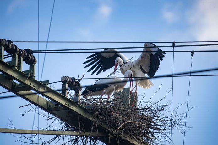 Het - inmiddels verwijderde - nest in aanbouw boven het spoor in Meppel.