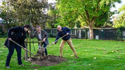Schepen De Donder en Open VLD-raadsleden planten nieuwe vredesboom