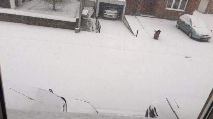 Bijzonder weerfenomeen: vooral Limburg en Vlaams-Brabant bedekt onder laag industriële sneeuw