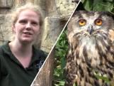 Oehoes steeds vaker gedumpt: 'Niet geschikt als huisdier'