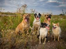 Mogen honden los op dijk? Borden moeten voor duidelijkheid zorgen