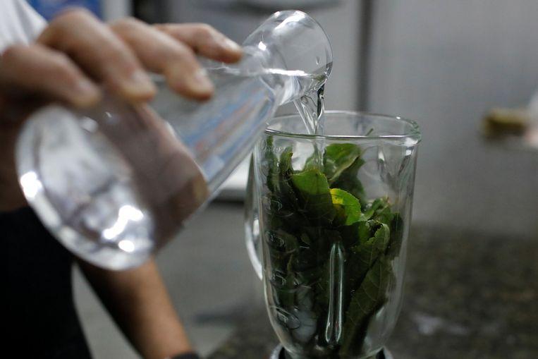 Een hiv-patiënt bereidt een drankje met bastaardceder. De tannine in de plant zou het virus moeten remmen.