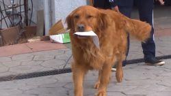 Hulpbehoevende vrouw krijgt boodschappen aan huis bezorgd door hond Sunny