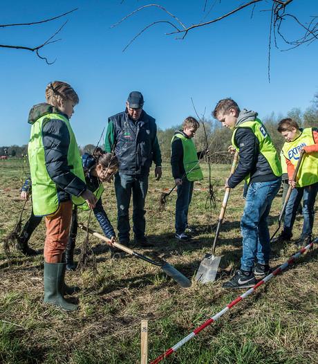 Veel jonge aanplant de grond in tijdens boomfeestdag
