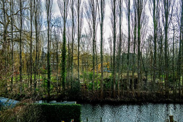 Kaalslag aan de 's-Gravenweg in Rotterdam-Prinsenland, waar tientallen bomen wijken voor een nieuwe woonwijk. Bewoners van de Gerardus van Sillevoldtstraat zien de kap met lede ogen aan.