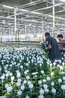 Exportwaarde groente en bloemen blijft stijgen