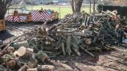 Gemeente verkoopt drie containers hout, maar wel in één lot