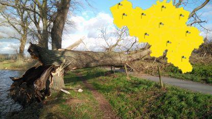 Code geel afgeblazen: meer dan 100 meldingen over schade in Limburg