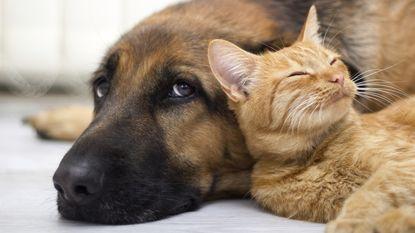 Is je huisdier allergisch aan jou?