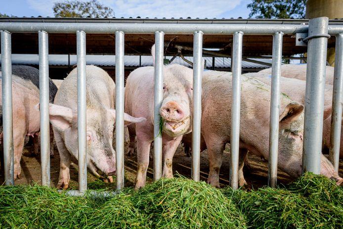 Door de uitbraak van Afrikaanse varkenspest in China, was er vooral uit dit land veel vraag naar Nederlands varkensvlees.