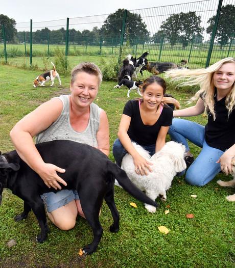 80 honden houden 'a way of life' voor Debby uit Langeveen