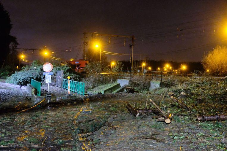 Bomen opgeruimd aan spoorweg Londerzeel