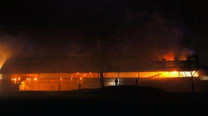 Honderden koeien blijven achter in brand
