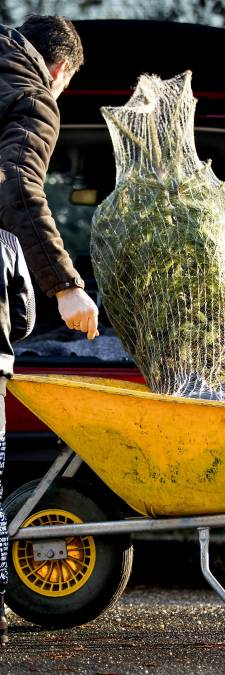 We krijgen een typisch Nederlandse kerst: groen als een kerstboom