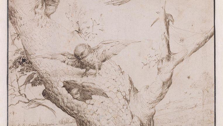 Een schildertij van Jheronimus Bosch, Het uilennest, uit de Koenigscollectie. Beeld Boijmans