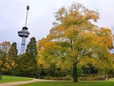 Duitse toeriste (18) belaagd in Het Park bij Euromast