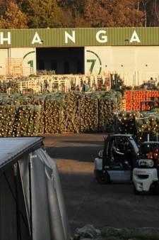 500.000 kerstbomen op Vliegveld Twente