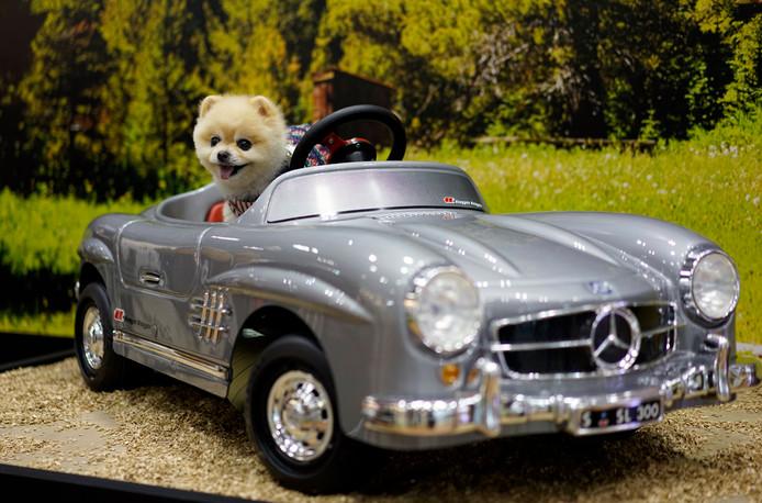 Een leuke Mercedes cabrio voor je pup? De hond doe je er waarschijnlijk geen plezier mee.