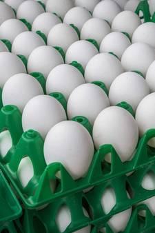 Eierschandaal treft ook boer in Tilligte: 3.000 kippen geruimd